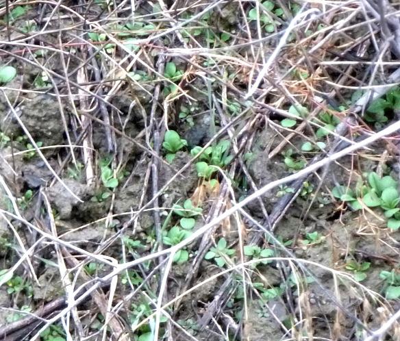 weedsclose
